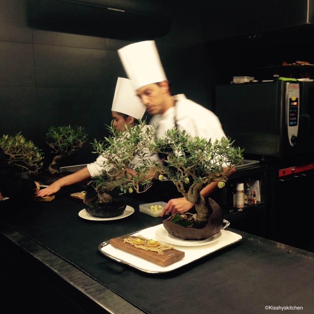 olive tree- Cellar de can